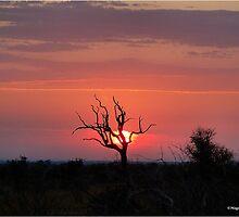 SATARA SUNSET IN THE KRUGER NATIONAL PARK by Magriet Meintjes