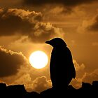 Penguin Silhouette by John Dalkin