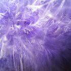 Purple Feathers by sunsetgirl