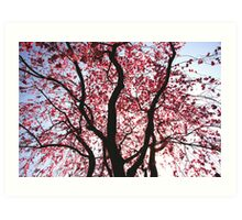 Pink Weeping Willow Art Print