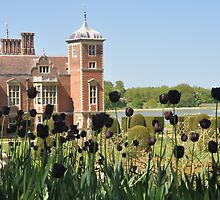 Black Tulips at Blickling by ColinKemp
