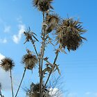 Winter Thistle by Heather Crough