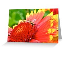 Hover Fly Greeting Card