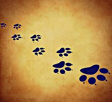 Animal Paw Print by Colin Bedson