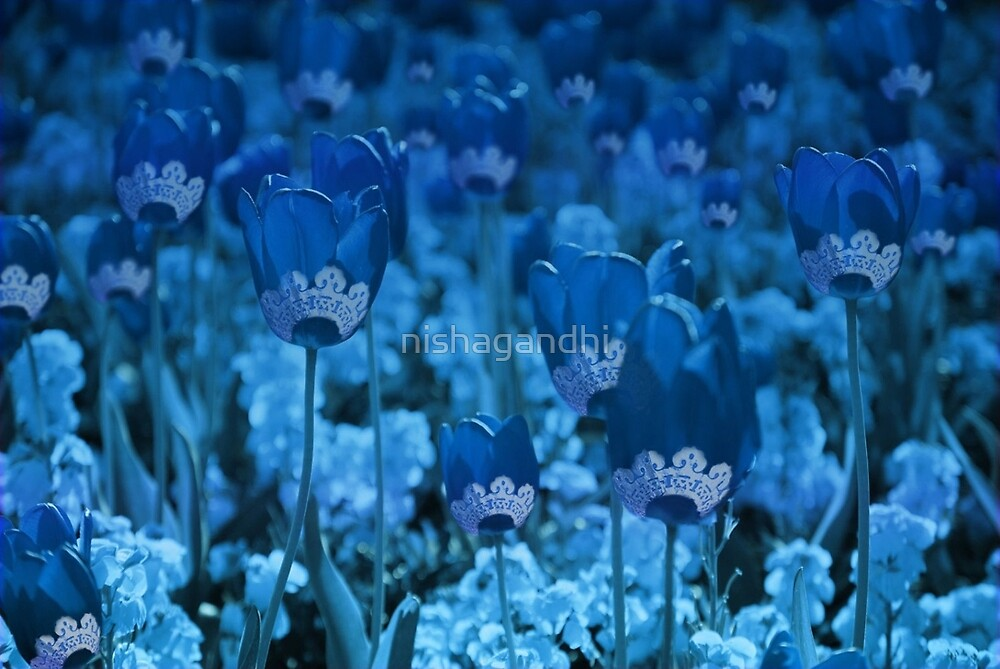 Tulips... by nishagandhi