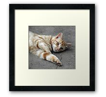 Ginger Tabby Fred Framed Print