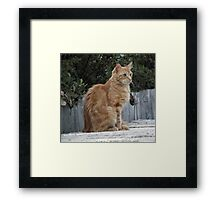 Fred on the Shed Framed Print