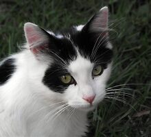 Barney the curious black and white cat by Steven Cousley