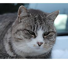Uninterested Cat Photographic Print