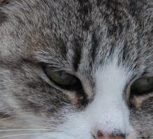 Uninterested Cat Sticker