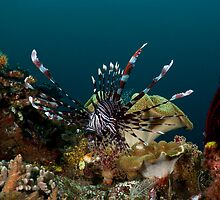 Lionfish Reef Scene by Todd Krebs