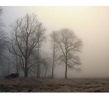 winter mist Photographic Print