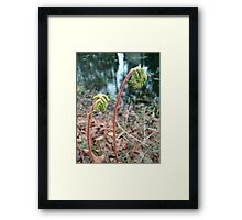 CINNAMON FERNS UNFOLDING Framed Print