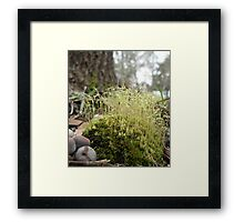 TINY MOSS FOREST Framed Print