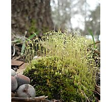 TINY MOSS FOREST Photographic Print