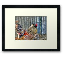 Rooster of the Barnyard Framed Print