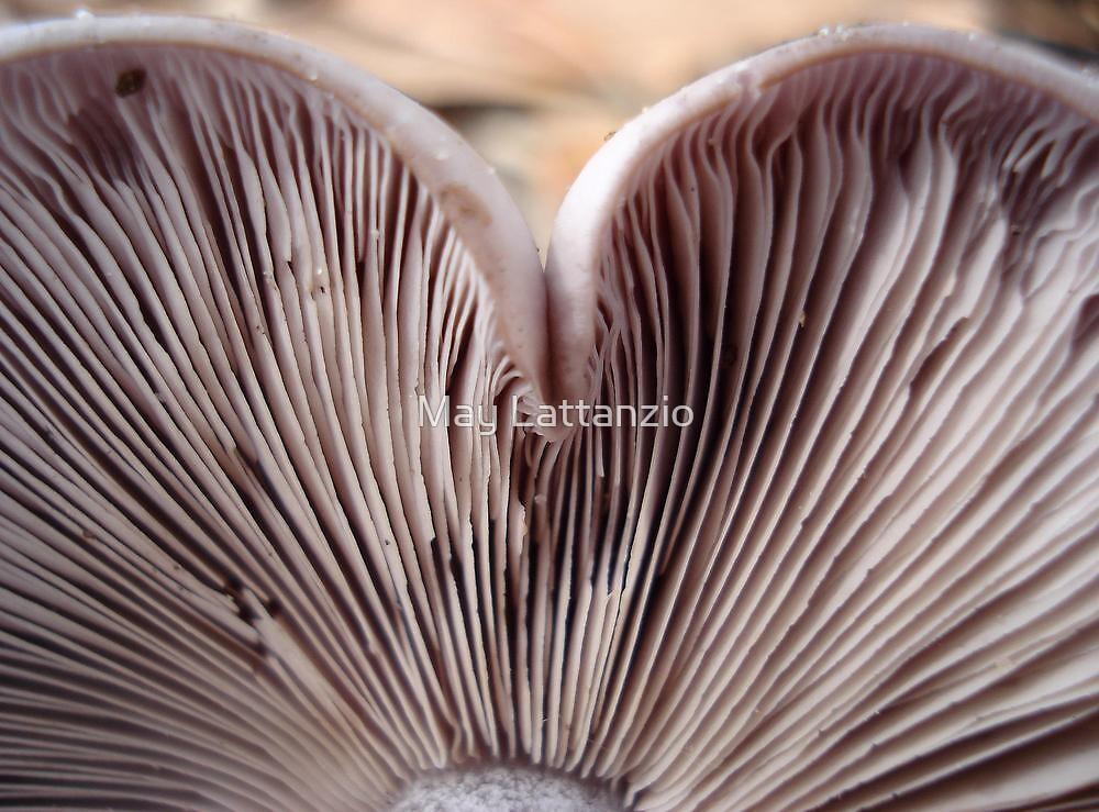 PURPLE HEART by May Lattanzio