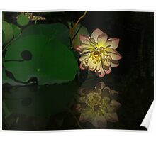 Lotus Bloom Poster
