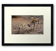 Deer fight! Framed Print