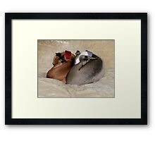 Snug in a Rug Framed Print