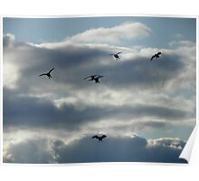 Honk! Honk! Wings Out, Paddles Down Poster