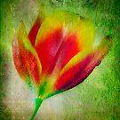 Love blooms... by Anne  McGinn