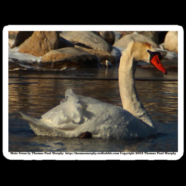 Mute Swan by Thomas Murphy