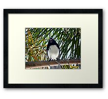 Angry Wagtail Framed Print