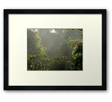 In the Midst of the Woods - Nature Walk 1   ^ Framed Print