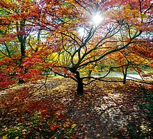 Autumn glory by Christopher  Rees
