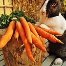 Bunny Antics by Deb Maidment