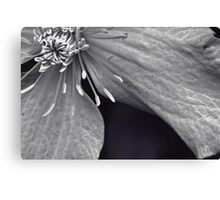 Clematis in Monochrome II Canvas Print