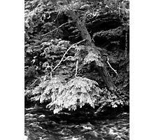 still tree moving river Photographic Print