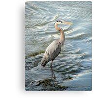Big Bird Posing Canvas Print