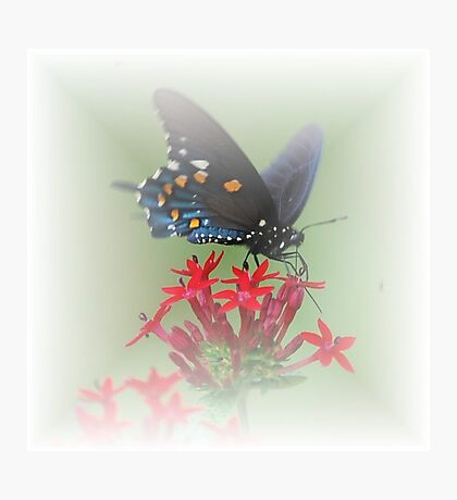 Beauty Flies Photographic Print
