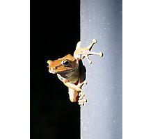 Frog sticks!  Photographic Print