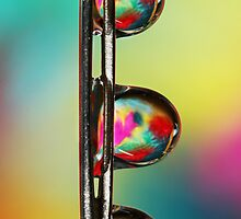 Needle with Tropical Droplets by Sharon Johnstone