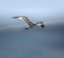Heavenly Flight by linaji