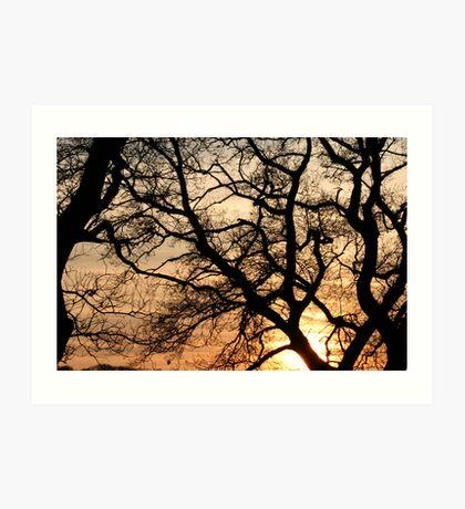 Pretty branches! Art Print