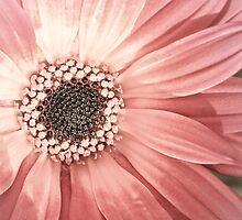 Pretty in Pink by Stephanie Sim