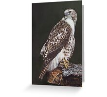 Juvenile Red-Tailed Hawk Greeting Card