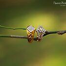 RIngs !!! by Naveen  Sharma