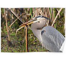 Great Heron With Dinner Closeup Poster