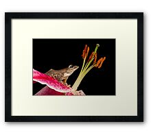 Malaysian flying frog Framed Print