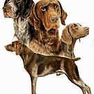 German Short-haired Pointer by BarbBarcikKeith