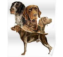 German Short-haired Pointer Poster