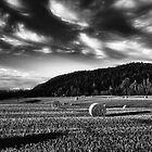 Harvest by Erik Brede