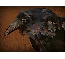Curious Crow 2 Photographic Print