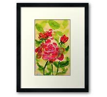 Majestic roses, watercolor Framed Print