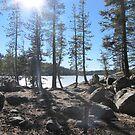 Lake Alpine, CA by Shelly Cimoli
